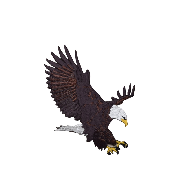 Large Bald Eagle Landing