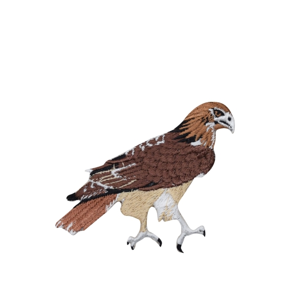 Natural Red Tail Hawk Bird