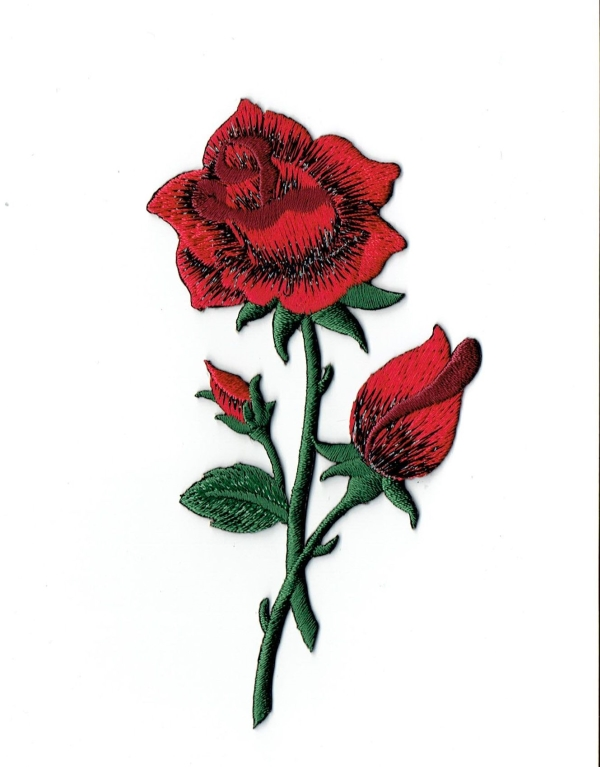 Red Rose with open Petals and Stem