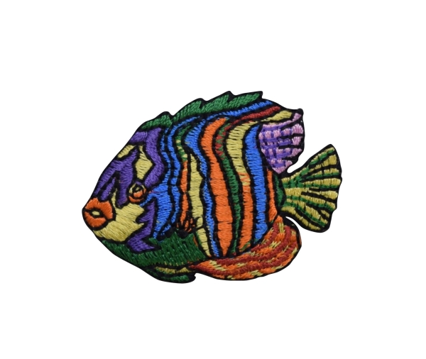 Striped Angelfish