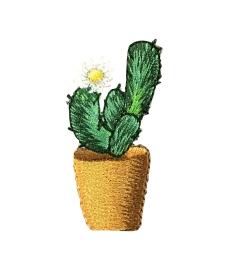 Cactus - White Flower