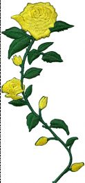 Yellow Roses Curved Stem Facing Left