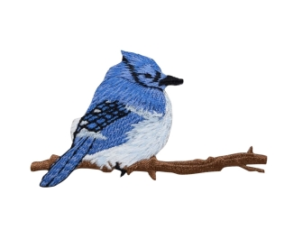 Blue Jay facing right