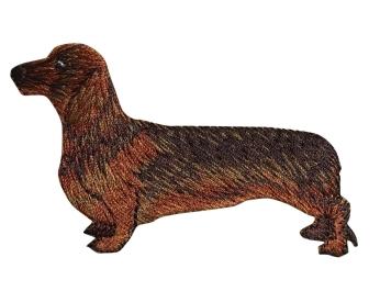 Dachshund Dog - Full Body