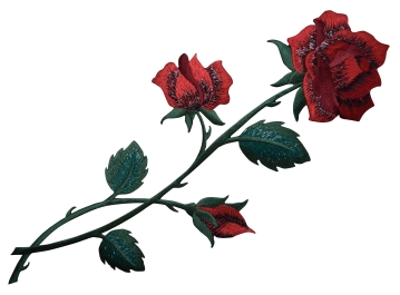 Large Red Rose with open Petals and Stem