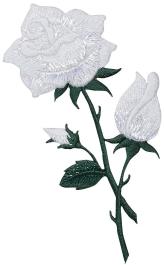 Large White Shimmery Rose
