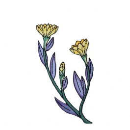 Yellow Flower with Purple Foliage